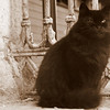 One thing I noticed distinctly different from Southeast Asia (where cats tended to look the same - scrawny and with stumpy tails) is that the cats of Istanbul are of all different shapes, colors, sizes and breeds.