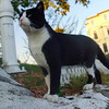 This tuxedo cat is striking a rather regal pose ;)