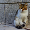 This kitty was especially friendly and closed its eyes and purred when we stroked its head.