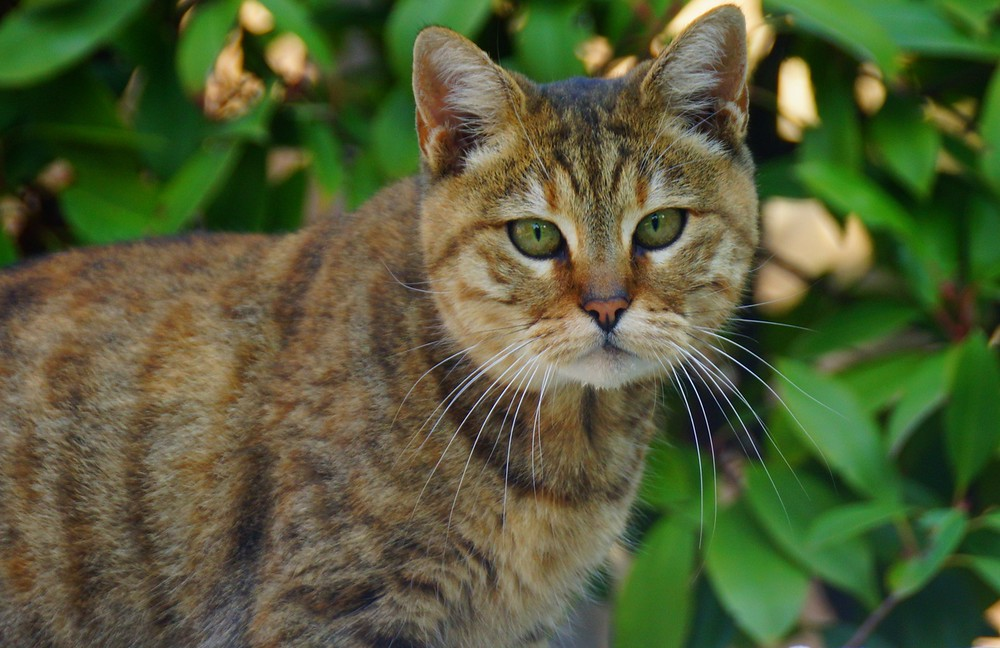 Although many of the cats on the streets of Istanbul are friendly they often have a bit of wild look in their eyes.