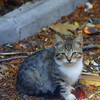 This cute kitten was a little timid but let me take a photo from a distance.