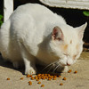 I wish more cities (countries) would take better care of their stray animals by providing food and assistance for them.