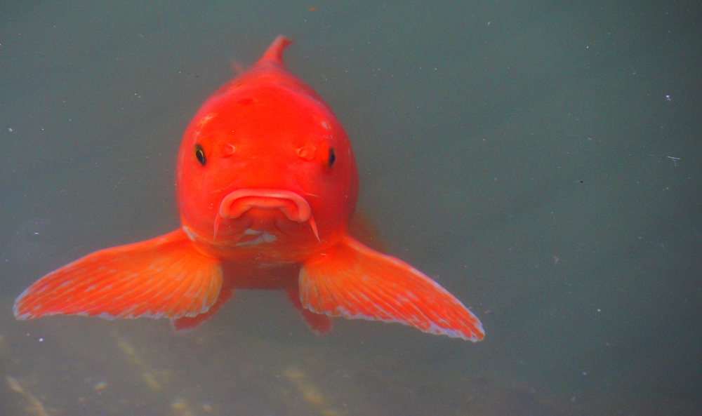 Well not everyone is smiling here: grumpy fish with a frown