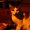 "<a href=""http://nomadicsamuel.com"">http://nomadicsamuel.com</a> : This cute cat with large eyes glances over at me briefly."