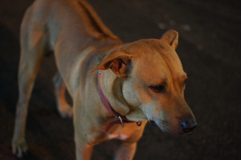 """<a href=""""http://nomadicsamuel.com"""">http://nomadicsamuel.com</a> : A dog patiently stands still."""