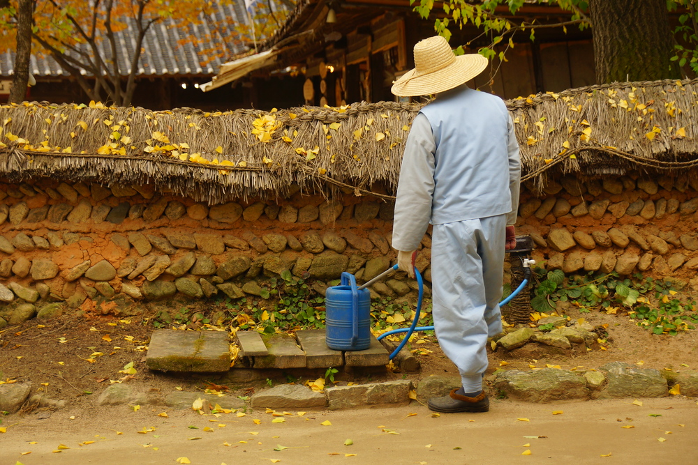 Here a Korean staff member dressed as a traditional farmer tends to a watering can.
