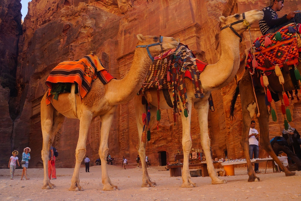 Fancy a camel ride? A few days later we rode camels from our Bedouin camp grounds to the area where we'd eventually have breakfast. Camels = 1, Sam and Audrey = 0 To say these lumbering beasts tenderized us would be quite the understatement.