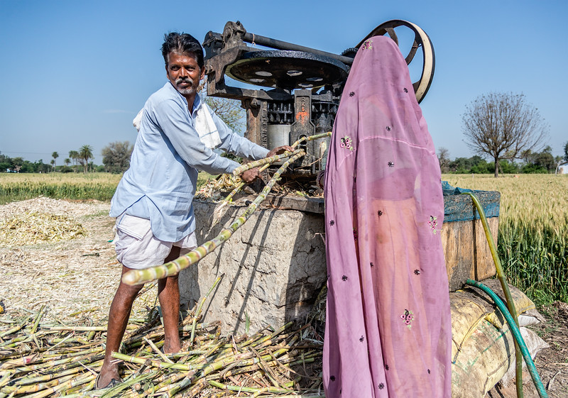Farmer and his wife load sugar cane into the juice extractor