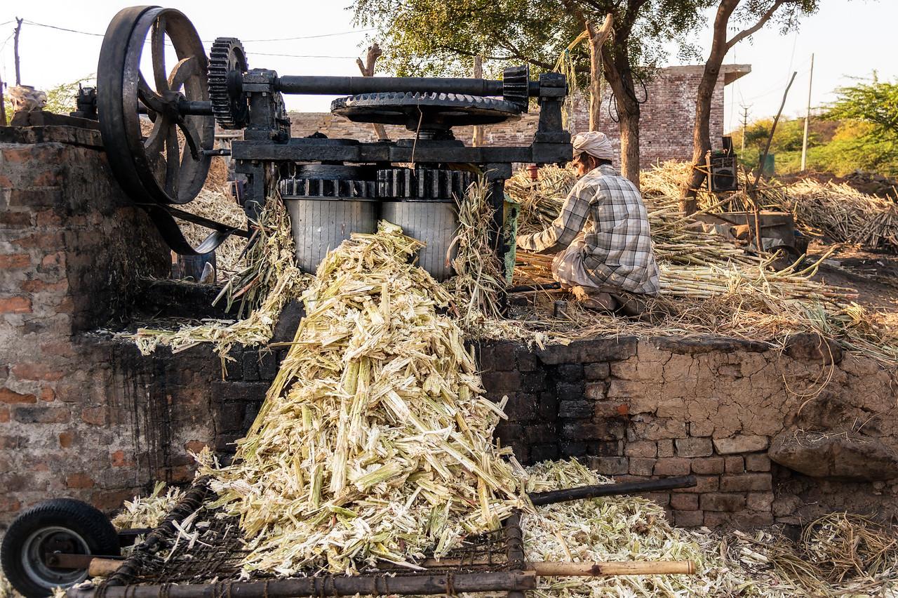 Man operating a sugar cane juice extractor solo, at another sugar farm near Bundi, India