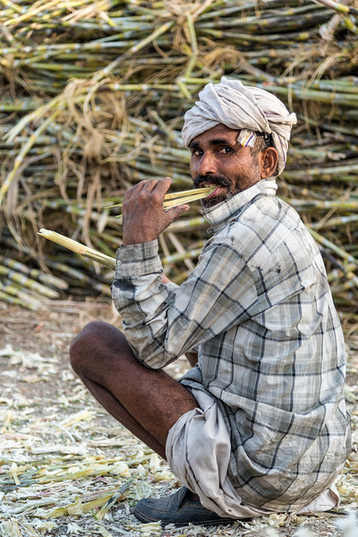 Eating fresh sugar cane