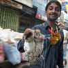 """This Bangladeshi man proudly displays the birds in his hands in a hectic area of Old Dhaka, Bangladesh:  <a href=""""http://nomadicsamuel.com/photo-essays/authentic-smiles-from-bangladesh"""">http://nomadicsamuel.com/photo-essays/authentic-smiles-from-bangladesh</a>"""