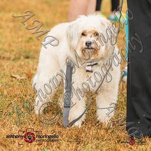 dirtydog_0010-32025