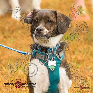 dirtydog_0011-32026