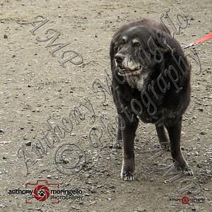 dirtydog_0015-50056