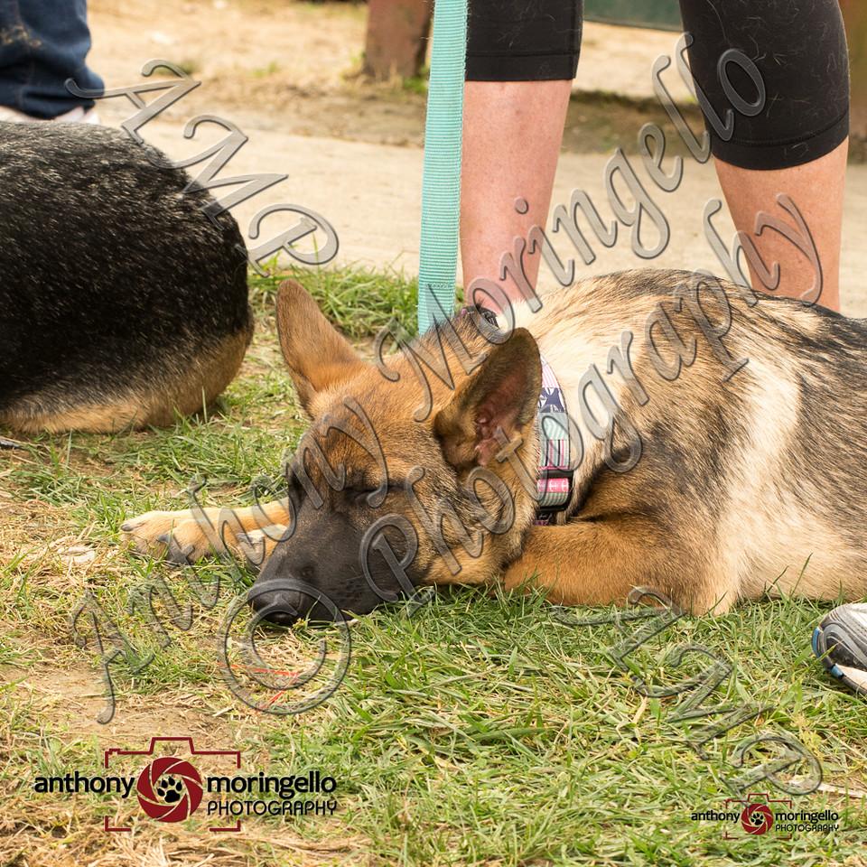dirtydog_0438-32761