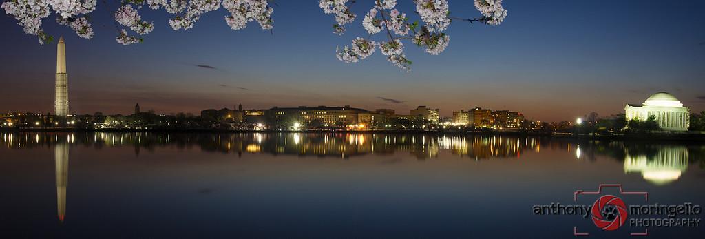 DC Cherry Blossoms 2013