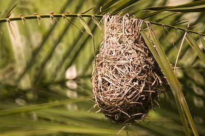 Weaver nest