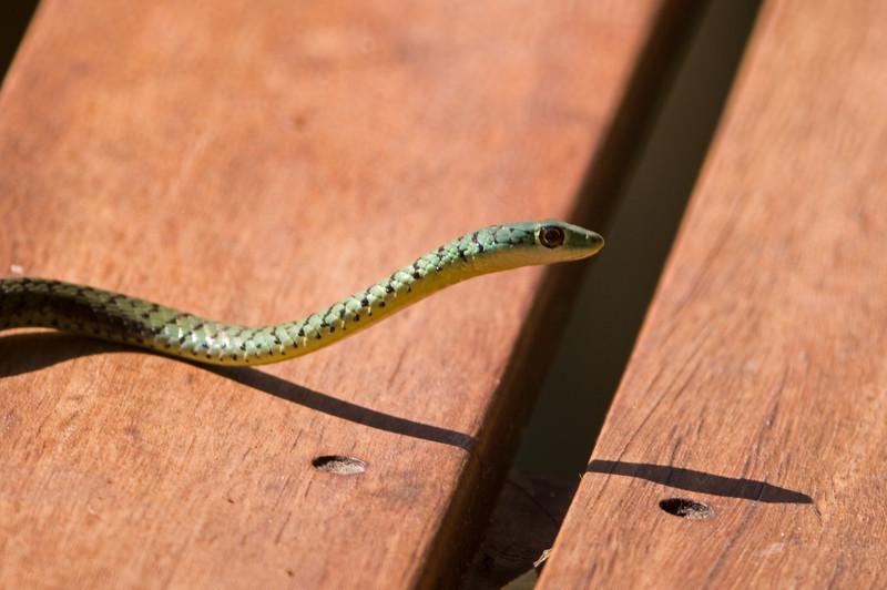 Snake near Dan's cabin