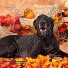 dogtown_4945