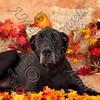 dogtown_4946