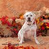 dogtown_4865