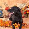dogtown_4963