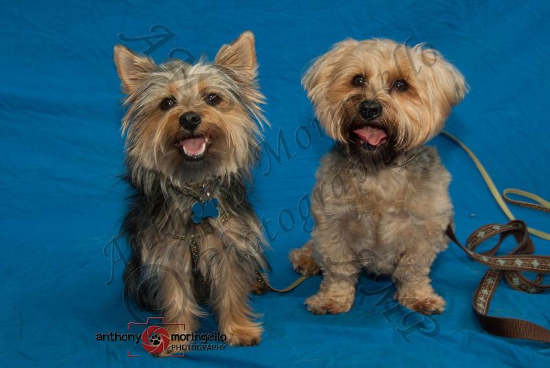 Bailey & Renny