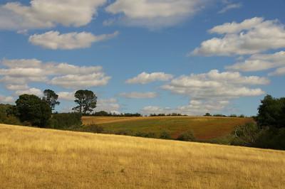 Assorted Landscapes