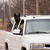2011 - Dog out for a ride -  Normal Illinois - 3/7 - 1