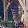 Washington Park Zoo - Michigan City Indiana - #14