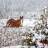 (# 6) Horse in the snow