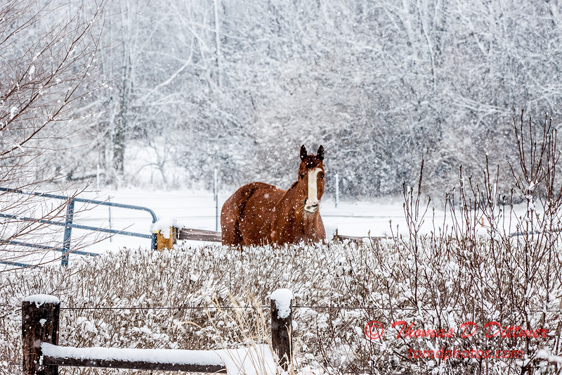 (# 7) Horse in the snow