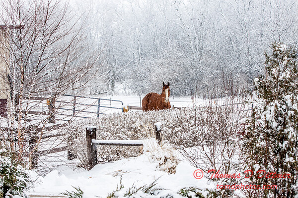 (# 9) Horse in the snow