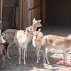Washington Park Zoo - Michigan City Indiana - #60