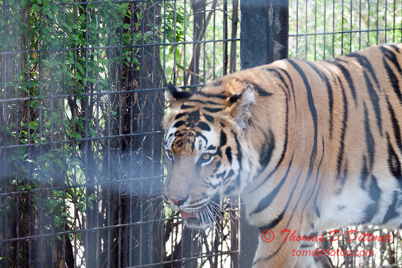 Washington Park Zoo - Michigan City Indiana - #62