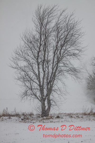 # 3 - Snow blurs the sight of the trees
