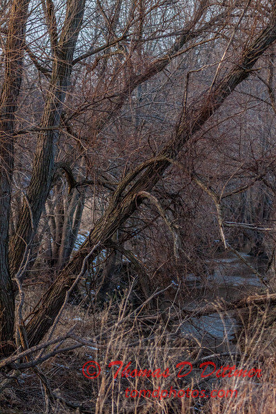 # 16 - Tree lined meandering stream