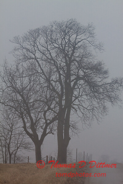 # 2 - Central Illinois tree on a foggy afternoon