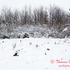 5 - Wooded areas surrounding Lake Evergreen on a snowy day - Northern McLean County Illinois - Monday December 1st 2008