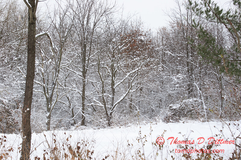 18 - Wooded areas surrounding Lake Evergreen on a snowy day - Northern McLean County Illinois - Monday December 1st 2008