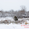 7 - Wooded areas surrounding Lake Evergreen on a snowy day - Northern McLean County Illinois - Monday December 1st 2008