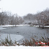 2 - Wooded areas surrounding Lake Evergreen on a snowy day - Northern McLean County Illinois - Monday December 1st 2008