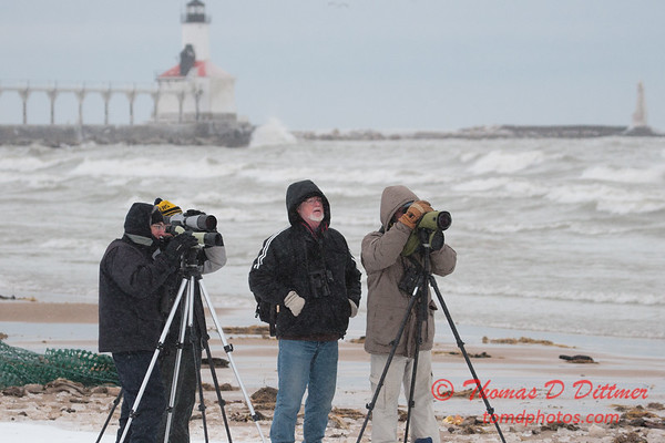 Photographers observing gulls near Lake Michigan