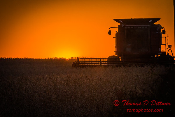 Soybean Harvest at Sunset