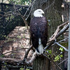 Washington Park Zoo - Michigan City Indiana - #13