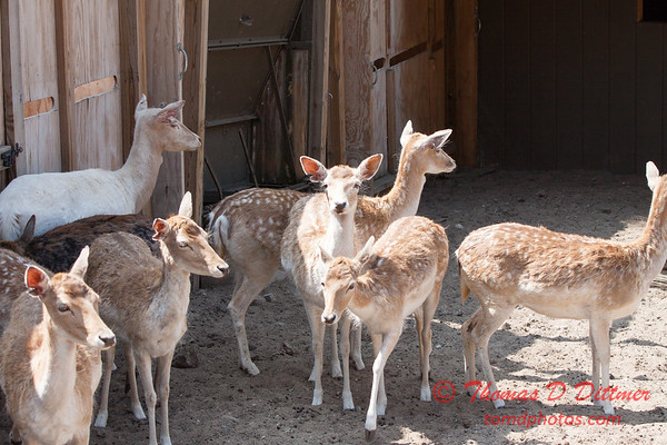 Washington Park Zoo - Michigan City Indiana - #61