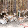 Washington Park Zoo - Michigan City Indiana - #46
