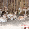 Washington Park Zoo - Michigan City Indiana - #47