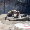 Washington Park Zoo - Michigan City Indiana - #27