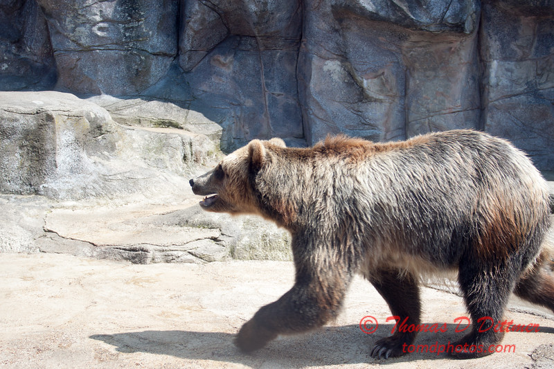 Washington Park Zoo - Michigan City Indiana - #21